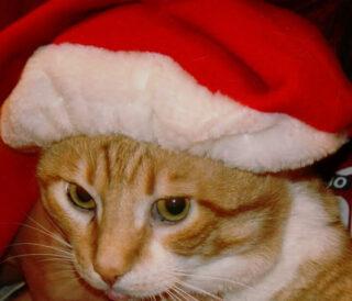 Il mio Natale micioso...
