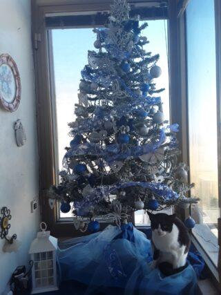 A Pippa piace tanto l' albero di Natale.....