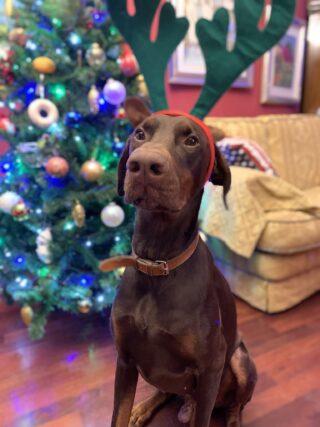 Natale è Mida che prova a mangiarsi l'albero