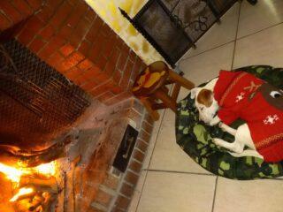 Il Nataleèanche calore per i nostri amici a 4zampe