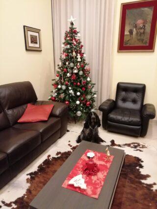 Natale è.... la gioia del mio amico a4zampe