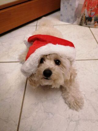 Felice Natale da Sasha!!!