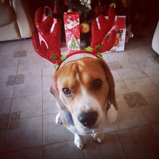 Natale è Amore,Gioia e Calore...Buon Natale 2019